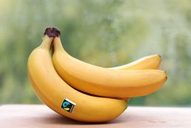 German appetite for Fairtrade bananas grows