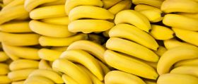 Marketing a focus at International Banana Symposium