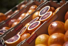 Russian ban shaping citrus market