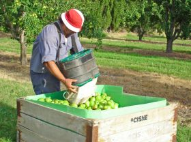 Argentine topfruit hit by double strike