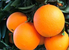 San Miguel expands citrus portfolio
