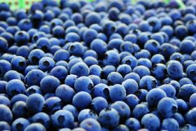 Blueberries could help fight Alzheimer's