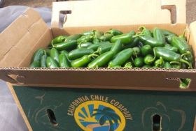 Vision expands chili pepper deal