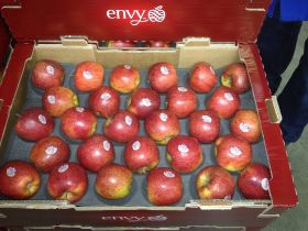First UK Envy exports sent to Singapore