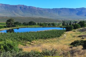 Drought hits RSA topfruit estimate