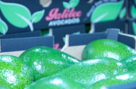 Israel ups avocado exports