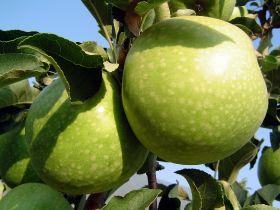 Indonesia bans Bidart Bros apples