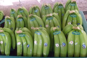 Peruvian banana exports soar