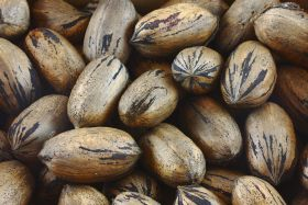Good prospects for Argentine pecans
