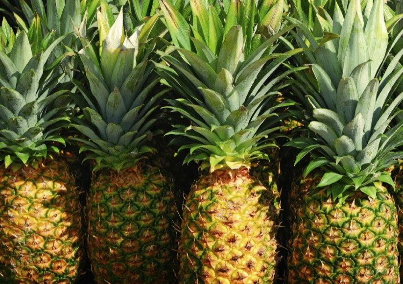 Huge cocaine stash hidden inside fresh pineapple