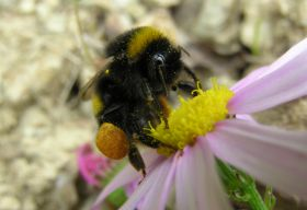 Bayer backs pollinator plan