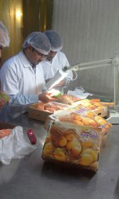 First Indian mangoes reach UK after ban lifted