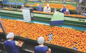 Positive outlook for Valencia's citrus harvest
