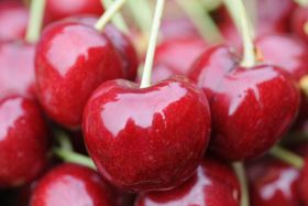 Reid Fruits teams with UTAS on cherry research