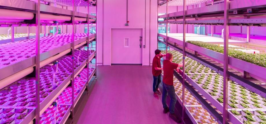 Aquaponic farm gets green light