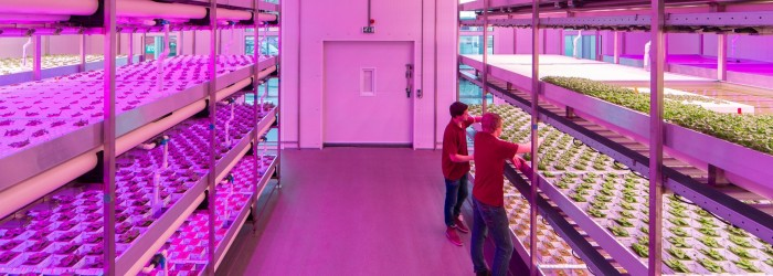 Aquaponic farm gets green light
