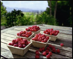 SanLucar invests in Tunisian raspberries
