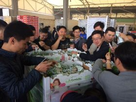 Canadian Cutecumbers land in China