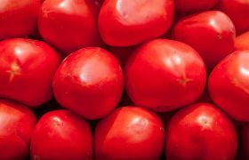 Italian tomato supply chain under fire in new report