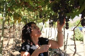Chile chases the perfect grape