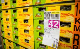 Zespri licenses more SunGold plantings