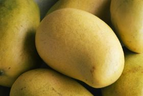 Pakistani mango consignment rejected