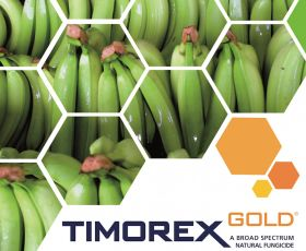 Philippines turns to Timorex Gold