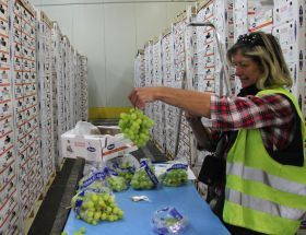 Koper top of the ports for Egyptian grapes