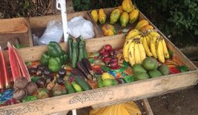 World's most fragile country wants to export fruit and veg