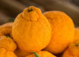 Buoyant Australian citrus industry seeks expert advice