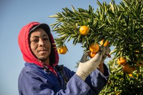 RSA citrus backs black farmers
