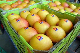 Indonesia reopens to Aussie mangoes