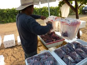 Asian demand for California's grapes