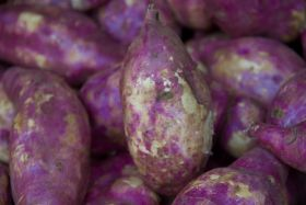 Purple potatoes 'may help limit the spread of cancer'