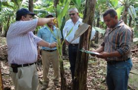 Productivity boost for banana growers