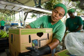 Massive rise in Fairtrade banana volumes
