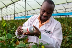 Kenya pioneers Integrated Crop Management