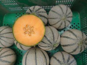 Melon market in flux