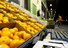 Exports driving SA wholesale expansion