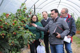 Growers sign £400k raspberry breeding agreement
