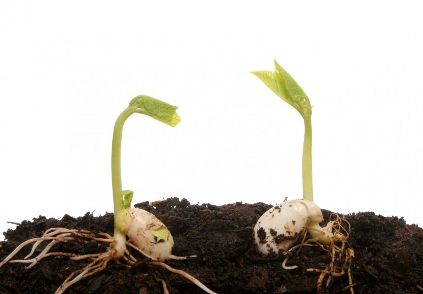 rijk zwaan seeds