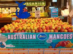 Calypso mangoes to make mark in US