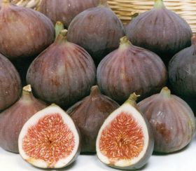 Powder-free figs head for Europe