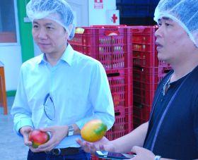Korea opens doors to Peruvian mangoes