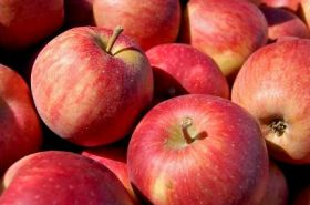 CSIRO collates apple research