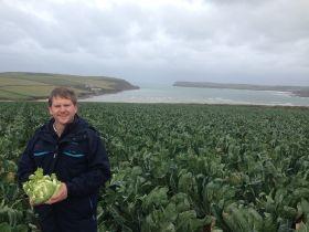Cauliflower waste concerns spark supply debate