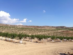 New horizons beckon for Spanish stonefruit