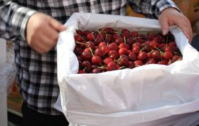 Unregulated markets lead way for Aus cherries