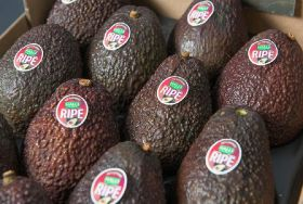 Kenyan avo grower certified by Rainforest Alliance