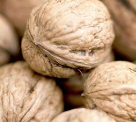 Funding boost for Australian nut production